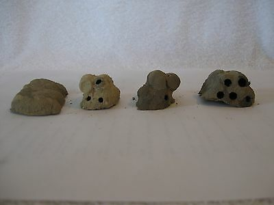4 Small Texas Dirt Mud Dauber Nests ~ Science Project, Taxidermy