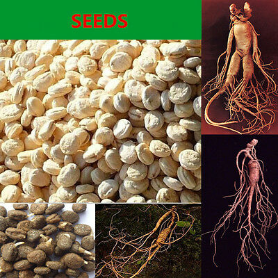 20 Pcs Seeds Food Garden Greens - Many Varieties Rare Edible Yummy Easy Grow LY