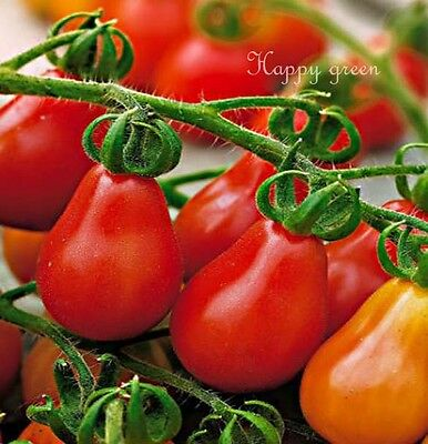 VEGETABLE TOMATO - RED PEAR - Cherry bell - 140 SEEDS