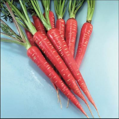 Vegetable - Carrot - Red Samurai F1 - 100 Seeds - Economy Pack