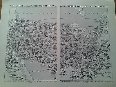 Map of Birds Fish & Beasts ! of America USA 1924 2 Small Pages Ideal to Frame