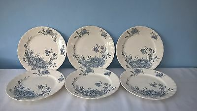 """ANTIQUE 6 x DINNER PLATES LATE MAYERS 1790 KEELING & Co DAISY 10"""""""