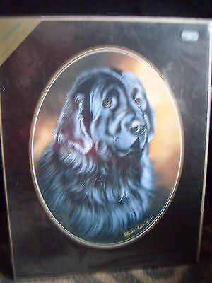 Beautiful sealed unmounted Newfoundland print by Pollyanna Pickering