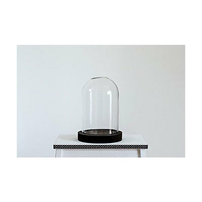Medium Glass Display Cover Dome Cloche With Black Wooden Base by TOBS