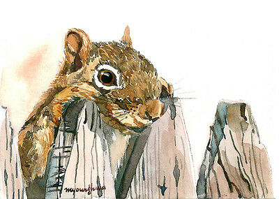 ACEO Limited Edition -Hey, Squirrel, Art print of original watercolor