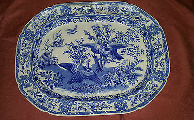 Rare Mid 19th Century Blue & White Pearlware Platter - Vulture& Eagle 48 cm Long