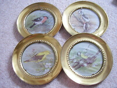 Collectable bird picture under glass in brass frame,wall hanging,set of 4 pieces