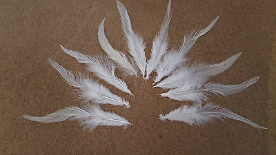 15 x 14-17 cm white 100% natural rooster feathers for crafts dyeing etc