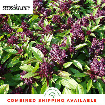 BASIL - Siam Queen (300 Seeds)