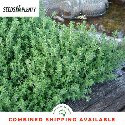 THYME - Common (3000 Seeds)