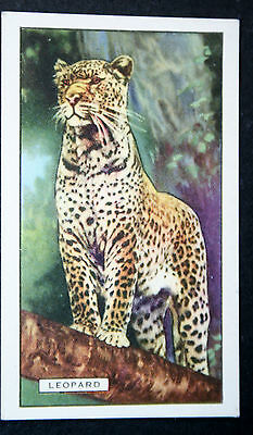 Leopard    Original  Vintage Colour Card  # VGC