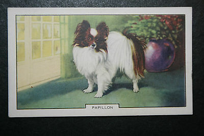 Papillon  Dog      Vintage Coloured Card  #  VGC