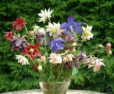 AQUILEGIA 200 seeds - 15 + types - a mixed pack of seeds - 2016 Harvest  !