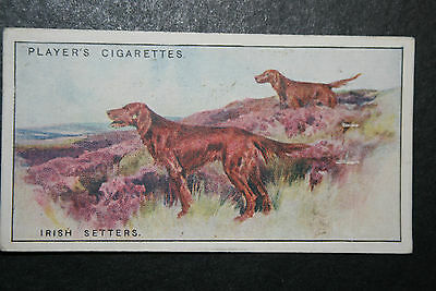 Irish Setters     Original 1920's  Vintage Illustrated Card  ## VGC