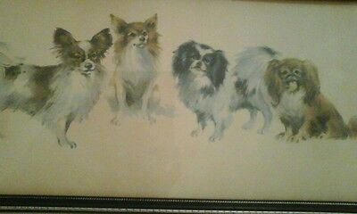 Historical  dogs painting picture papillon japanese chins etc....