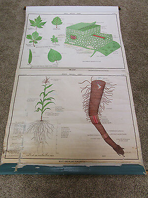 Vintage Nystrom Canvas Industrial Leaf &plant School Pull Down Map Science Chart
