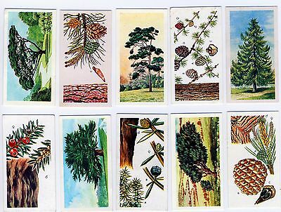 """Brooke Bonds """"Trees in Britain"""". A full set of 50 cards."""