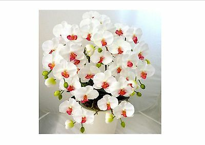 200 PCS White Phalaenopsis Seeds Butterfly Orchid Potted Seeds