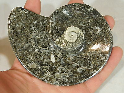A Small Beautiful Black Stone Orthoceras Fossil Plate Bowl or Key Holder 165gr