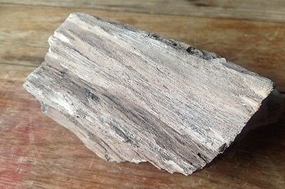 PETRIFIED (SILICIFIED) Jurassic Fossil CONIFER WOOD P. purbeckensis Dorset UK