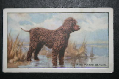 Irish Water Spaniel in Field Setting  1930's Original Vintage Illustrated Card