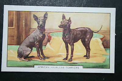 African Hairless Terrier    Original 1930's  Vintage Coloured Card   VGC