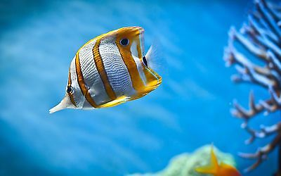 Orange And White Stripy Fish In Sea Poster A4 A3 A2 A1 Gift Present HCP0022
