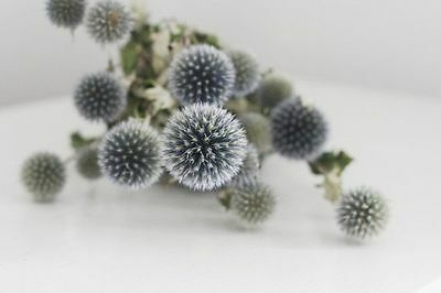 "Beautiful 18"" Natural Air Dried Globe Thistle Echinops Bundle Decorated Floral"