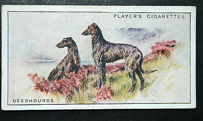 Scottish Deerhound    Original Vintage Scenic Illustrated Card  # VGC
