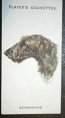 Scottish Deerhound   1920's Vintage Picture Card # VGC