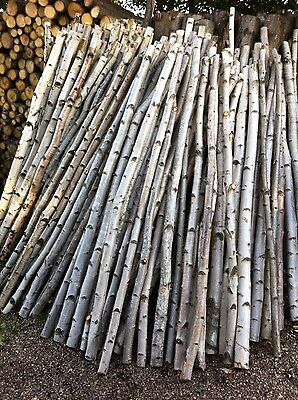 Decorative logs birch poles stunning from posh logs