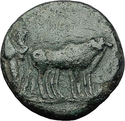 AUGUSTUS 27BC Philippi Macedonia PRIESTS Founding City Oxen Roman Coin i59268
