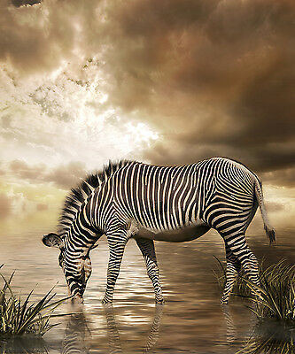 One Zebra Animal Poster High Quality Canvas Home Art Print Painting Unframed