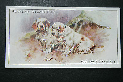 Clumber Spaniel     Vintage 1920's Illustrated Card # VGC