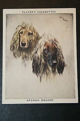 Afghan Hounds    Vintage Twin Portrait Card #  EXC