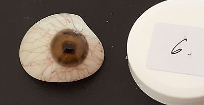VINTAGE ORIGINAL GERMAN GLASS EYE ANTIQUE RARE PROSTHETIC WWII LAUSCHA No.06