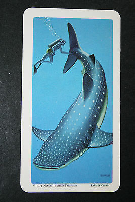 Whale Shark     Illustrated Card   VGC / EXC