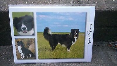 ~*~ Border Collies  Birthday Card ~ Country Cards ~*~