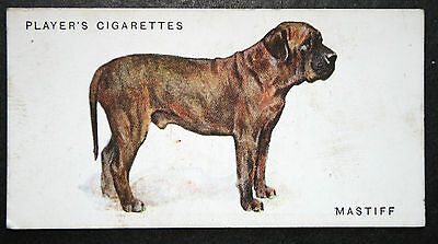 Old English Mastiff   Early 1930's Original Vintage  Colour Card  # VGC