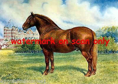 1911 Artwork~Suffolk Sire Stallion Horse~Prince Wedgewood~NEW Large Note Cards