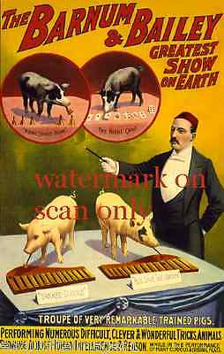 1898 Barnum & Bailey Circus Poster~RemarkableTrained Pig Pigs~NEW Lge Note Cards