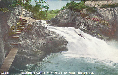 Salmon Leaping The Falls Of Shin, Nr LAIRG, Sutherland