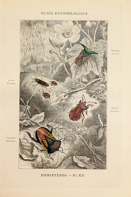 1876 French Antique Hand Coloured Print, Insects, Shield Bugs, (Plate 20)