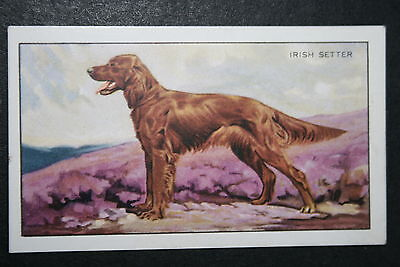 IRISH SETTER   Original 1930's Vintage Illustrated Card  #  VGC