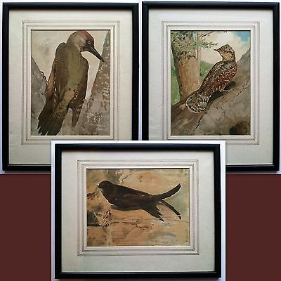 Three Léo Paul Samuel Robert 19Th Antique Chromolithograph Ornithological Prints