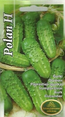 Pickling field short small cucumber Racibor H seeds Cucumis sativus Oгурцы Gurķi