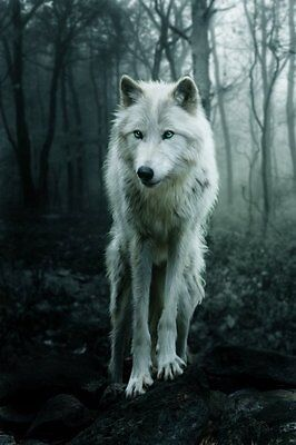 Wolf In The Wood Image Canvas Picture Wall Art A3