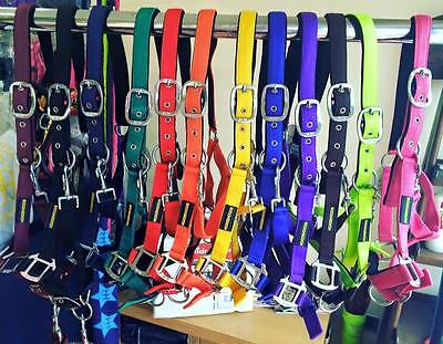 Under £10 Inc FREE Leadrope ALL Colours Nubuck HEADCOLLAR Quick Release Sets
