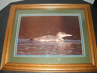 Woody Hagge signed titled framed loon photograph 6 1/2 bt 9 1/2 1984   320