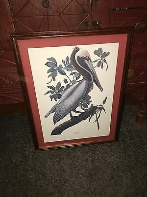 J. J. Audubon Hand Numbered Ltd. With Seal Edition Art Print Brown Pelican